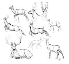 10 Deer Lineart Ref For Free Download On Ayoqq Org