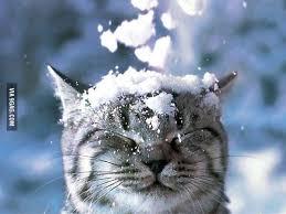 Bildergebnis für schnee lustig