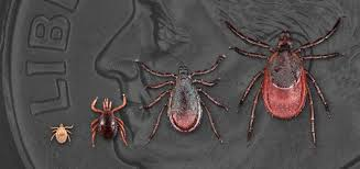 Cdc Tick Identification Chart Lyme Disease Lyme Disease Cdc