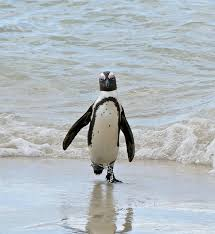 Image result for Penguin