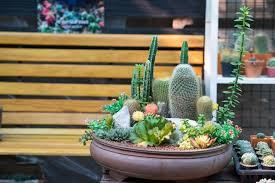 how to build an indoor succulent garden