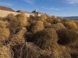 Small Picture 58 best TUMBLEWEED AMAZING VIREVOLETANT images on Pinterest