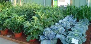 container garden vegetables. Vegetables In Container Garden Vegetable Gardening Containers Best Indoor . I