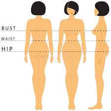 Womens Body Chart Womens Size Stock Vector Illustration Of Line Measurement
