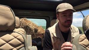 Watch: Seattle man survives close encounter with cheetah during ...