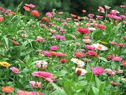 cut flower garden ideas interesting cut flower garden innovative ideas cutting garden tips annual cut flower