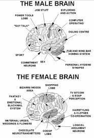 muskegonpundit shocking report who d a thunk it research research shows that differences in how men and women think are hard wired