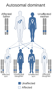 Inheritance Patterns New Human Genetics Wikipedia