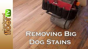 how to remove dog pee stain off wood floors