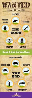 bugs wanted dead or alive infographic