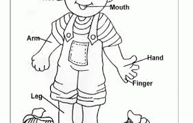 Small Picture Body Coloring Pages Syougitcom