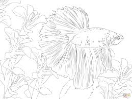 Betta Fish Coloring Page From Betta