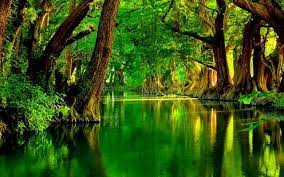 Green River Wallpapers - Top Free Green ...