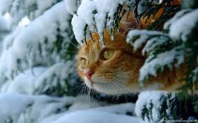 Image result for animals in winter images
