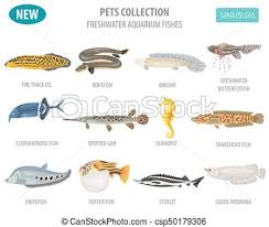 Freshwater Fish Identification Chart Unusual Freshwater Aquarium Fish Breeds Icon Set Flat Style Isolated On White Create Own Infographic About Pet