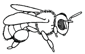 Breathtaking Honey Bee Coloring Pages Coloring Breathtaking Honey