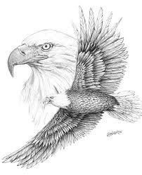 Bald Eagle Sketch Bing Images Birds Herinneringen Tatoeages