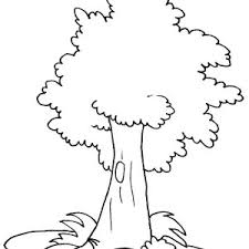 Small Picture Oak Tree Coloring Pages FunyColoring