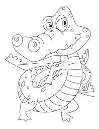 Small Picture 11 best Crocodilos images on Pinterest Alligators Animals and
