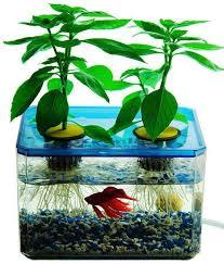 hydroponic fish tank garden