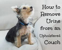 Image result for Pet Urine from Upholstery?