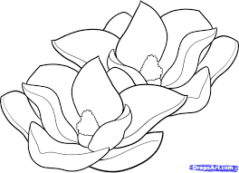 Magnolia Flowers Drawings How To Draw