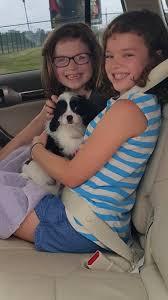 Puppies By Design Indiana Reviews Cavapoo Cavachon Breeder Reviews Foxglove Farm