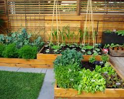 stylish patio vegetable garden