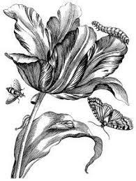 Antique Botanical Prints Black And White Making A Mark Book
