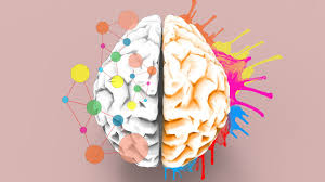 Image result for picture of brain