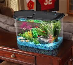 diy african dwarf frog tank setup care tips