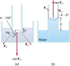 Cohesion And Adhesion In Liquids Surface Tension And