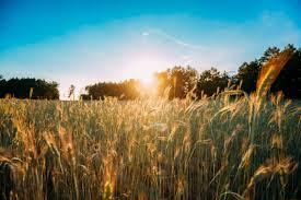 Poesie su giugno: le più belle per accogliere il mese e l'estate | DonnaD