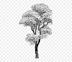 Tree Sketch Clip Art At Paintingvalleycom Explore Collection Of
