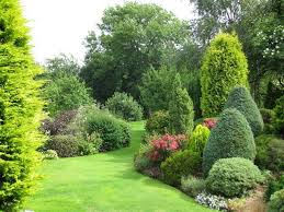 Small Picture evergreen borders gardening Pinterest Evergreen Gardens and