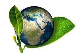 Resultado de imagen para dia mundial del medio ambiente