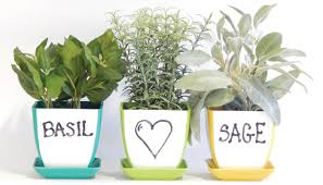 outdoor herb garden kit.  Kit With Outdoor Herb Garden Kit H