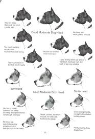 Pitbull Ear Crop Chart 66 Experienced Amstaff Growth Chart