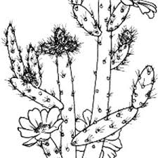 Small Picture Prickly Pear Cactus Coloring Pages Best Place to Color