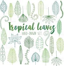 Hand drawn tropical leaves. Jungle set royalty-free stock vector art
