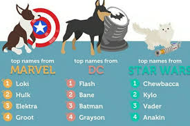 Most Popular Pets Britains Most Popular Pets Name Revealed And It Shows We