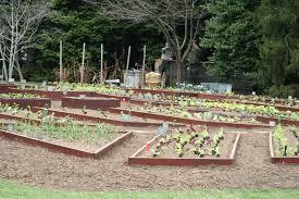 White House Kitchen Garden Kitchen Garden Plant Ideas From A White House Visit