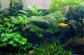 Le piante miniatlantide