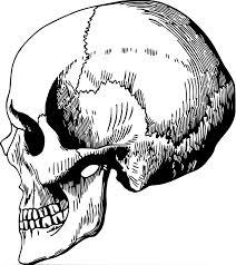 頭蓋 人間 プロファイル Pixabayの無料ベクター素材