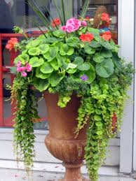 Accessorizing Your Front Porch With Container GardensContainer Garden Ideas For Front Porch