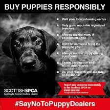 our cur priority is tackling the cruel and illegal puppy trade which puts profit before welfare under the banner of operation delphin