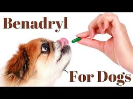 Benadryl Dosage For Dogs Chart Youtube