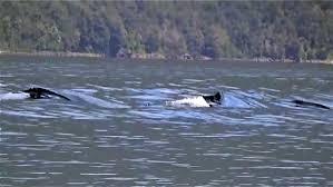 sea monster sightings 2014. Delighful Sea YouTube Premium On Sea Monster Sightings 2014 F