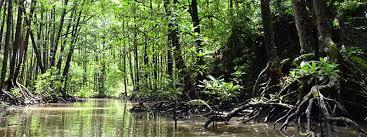 Resultado de imagen para manglares