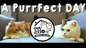 Celebrity Cats in Purrfect Cat Cafe